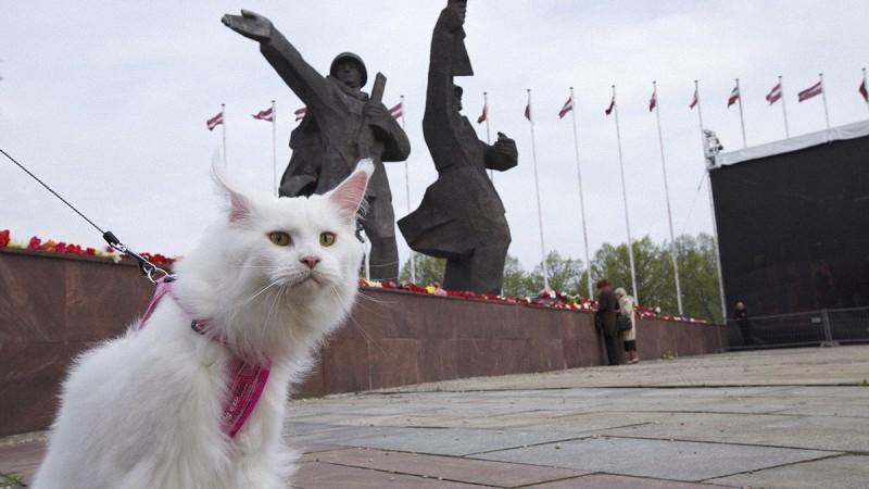 Cats in Riga